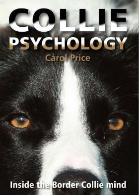 collie-psychology1