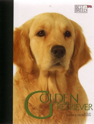 Golden Retriever BOB