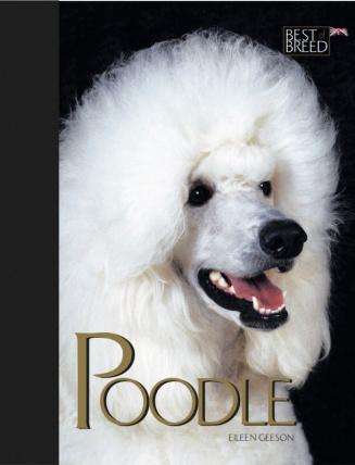 Poodle BOB