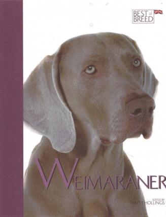Weimaraner BOB